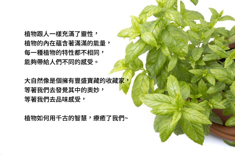 貝拉香氛,貝拉愛氛饗,植物,精油